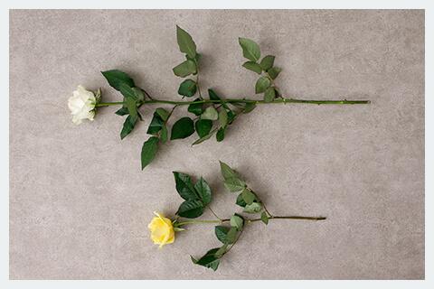 花2本の写真