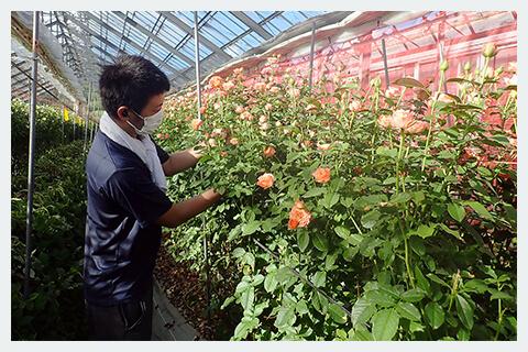 お花の生産者の写真